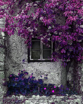 Orchid Vines Window and Gray Stone by Brooke Ryan