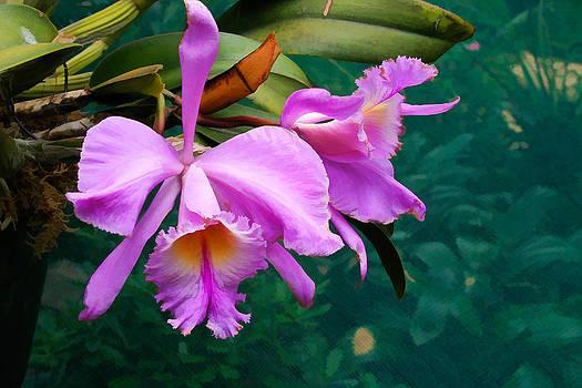 Orchids - Encinetas by James Bullard