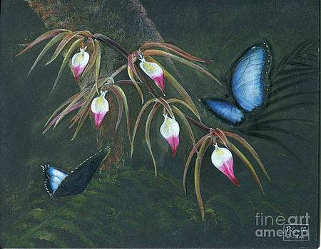 Orchids and Butterflies by Penrith Goff