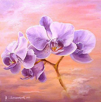 Orchids at sunrise... by Irina Sumanenkova