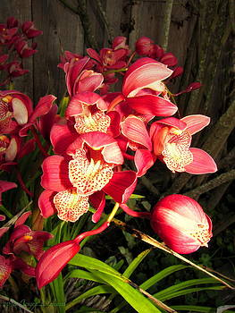 Joyce Dickens - Orchids Galore