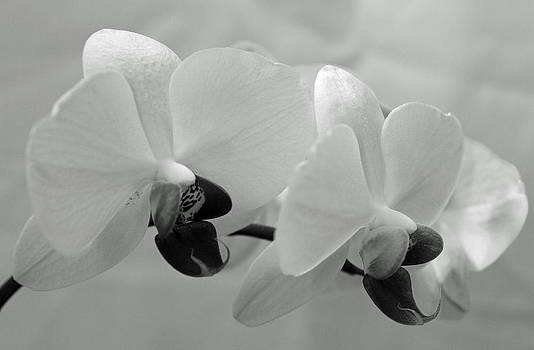 Orchids In B and W by Joan Powell