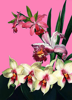Orchids by Steven Stines