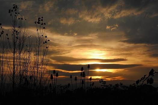 Oregon Sunset by Melissa Pollock