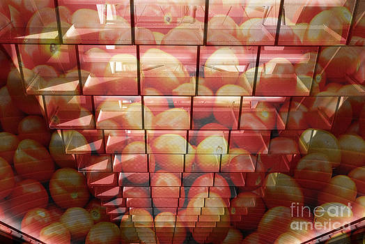 Organic Tomatoes by Floyd Menezes