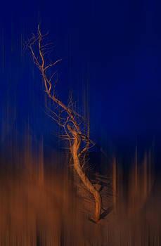 Dan Carmichael - Origin of Man - a Tranquil Moments Landscape