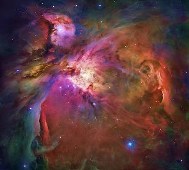 Dale Jackson - Orion Nebula
