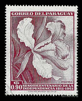 Orquidea by Andy Prendy