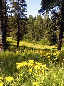 Kurt Van Wagner - Osha Trail Meadow Cloudcroft New Mexico