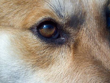 Oso The wonder Dog by Robert Rhoads