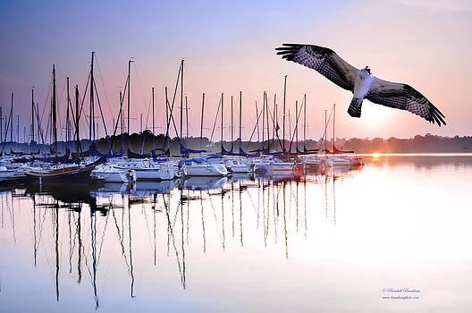 Randall Branham - Osprey Sunrise