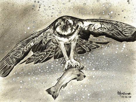 Osprey with its Kill by Prashanth Bala Ramachandra