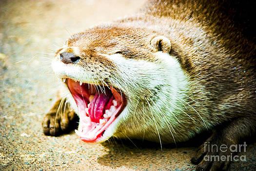 Otter 1 by Alan Oliver