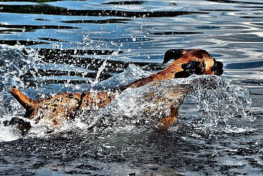 Out for a Swim by Don Mann
