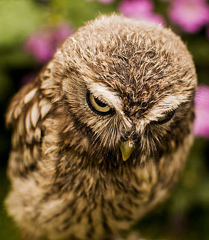 Owl 1 by Glenn Hewitt
