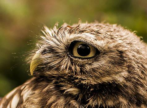 Owl 2 by Glenn Hewitt