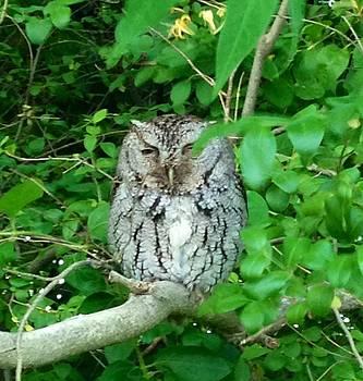 Owl at dusk by Angela McKinney
