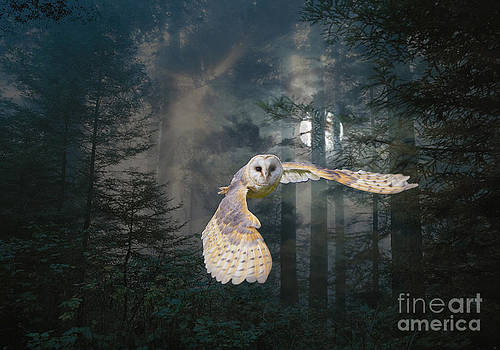 Owl at Midnight by Maureen Tillman