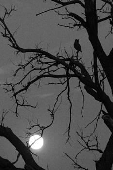 Owl By Night by Alicia Knust