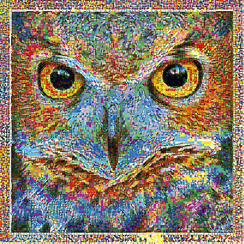 owl in Colours Explosion by Celso Maria