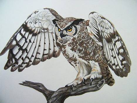 Owl Landing by Tanya Arends