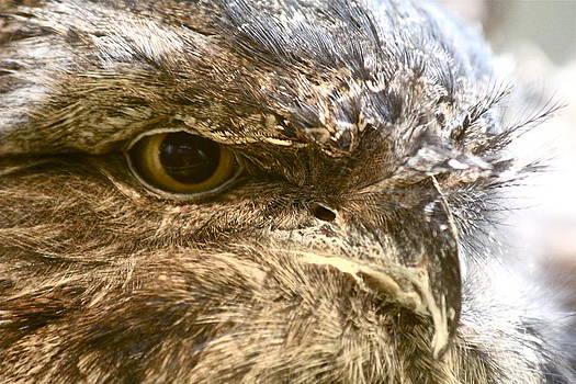 Bird's Eye by Lindsey Cockrum
