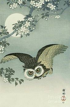 Reproduction - Owl - Moon - Cherry Blossoms