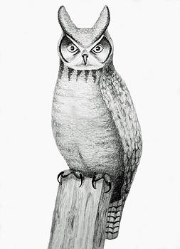 Owl by Sara Coolidge