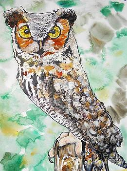 Owl Stare by Emily Michaud