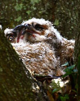 AnnaJo Vahle - Owly kiss