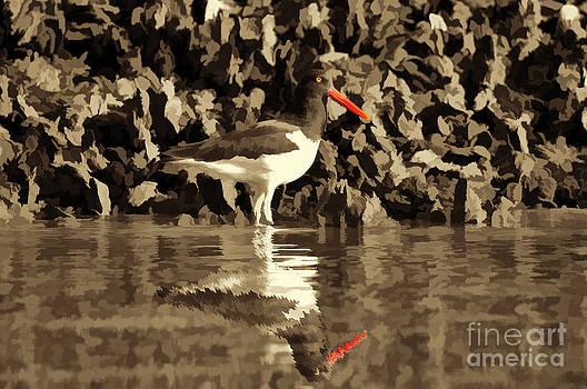 Dan Friend - Oystercatcher orange beak