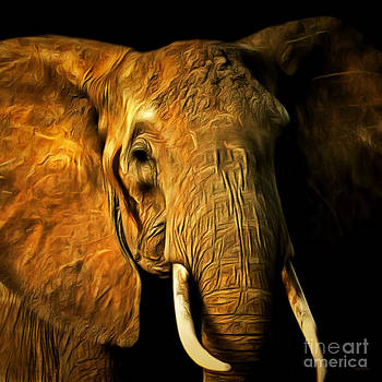 Wingsdomain Art and Photography - Pachyderm 20150210brun square