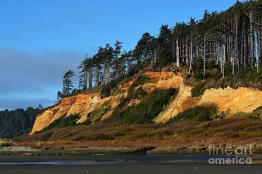 Pacific Coastline by Gayle Swigart