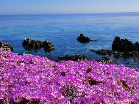 Pacific Grove In Bloom by Keeza Starr