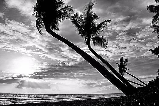 Pacific Paradise by DJ Florek
