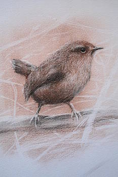 Pacific Wren by Jan Lowe