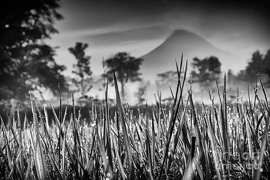 Paddy field with mountain background by Frederiko Ratu Kedang
