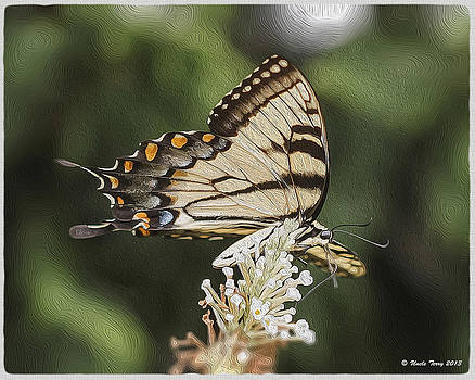 Paint for the Butterfly by Terry Jacumin