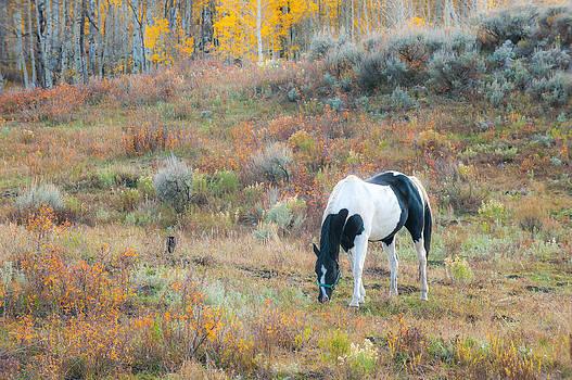 Paint in Autumn by Randy Giesbrecht