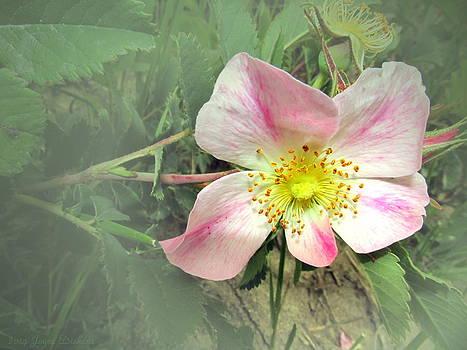 Joyce Dickens - Paint Mines Wild Rose