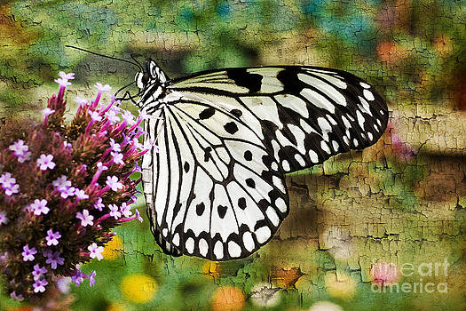 Painted Butterfly by Dolly Genannt