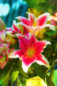 Painted Lilies by Joan Bertucci