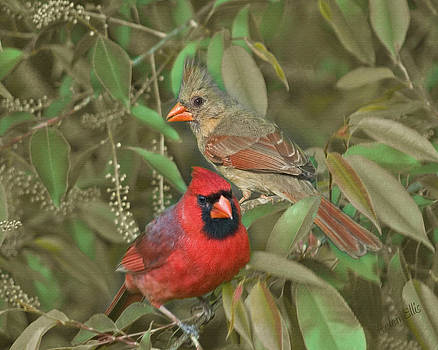 Pair of Cardinals by Helen Ellis