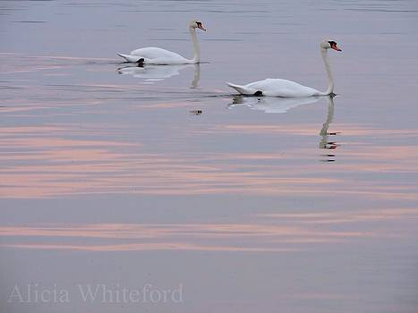 Pair of Swans  by Alicia Whiteford