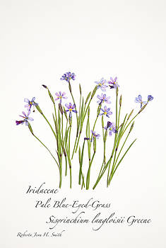 Pale Blue-Eyed Grass by Roberta Jean Smith