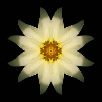Pale Yellow Daffodil Flower Mandala by David J Bookbinder