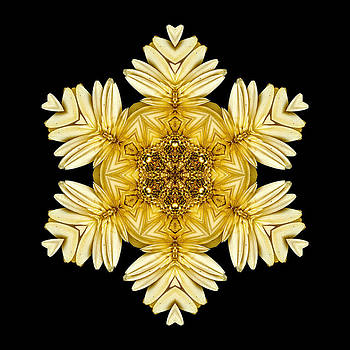 Pale Yellow Gerbera Daisy VII Flower MandalaFlower Mandala by David J Bookbinder