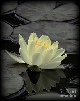 Pale Yellow Waterlily with Vignette Border by Kim Doran