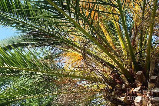 Palm Canopy by Jeanne Forsythe