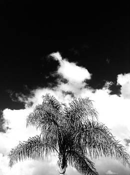 Palm cloud  by Natalya Karavay